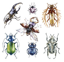 Watercolor Beetles Collection ...