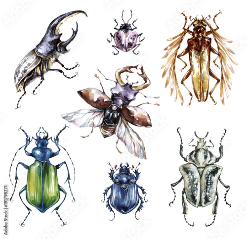 Photo Watercolor beetles collection on a white background