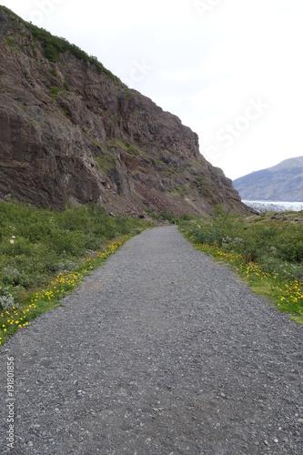 Foto op Canvas Olijf アイスランド、黄色い花の咲くスカフタフェトル氷河への道
