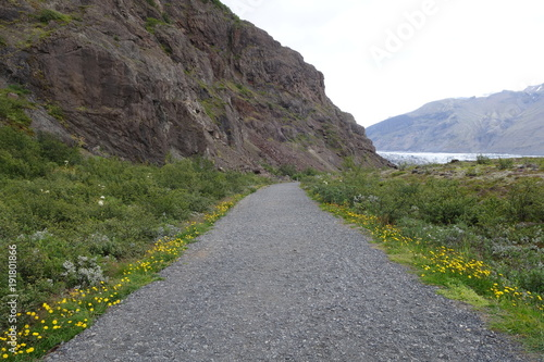 Foto op Canvas Olijf アイスランド、タンポポの咲くスカフタフェトル氷河への道