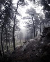 Misty Woods 1
