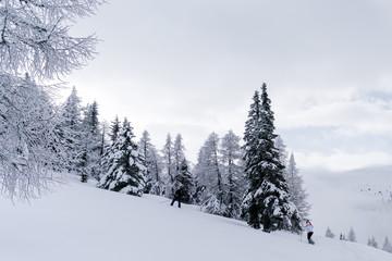 Verschneiter Wald in Schneelandschaft