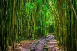 Fototapeta Bamboo - Pipiwai trail bamboo
