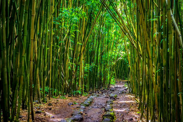 Pipiwai staza bambus