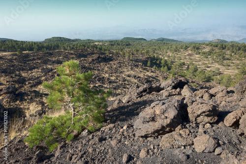 Fényképezés  Galvarina Plateau In Etna Park, Sicily