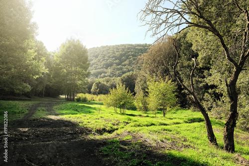 Fényképezés  Sunlight In A Green Glade Of Etna Park, Sicily