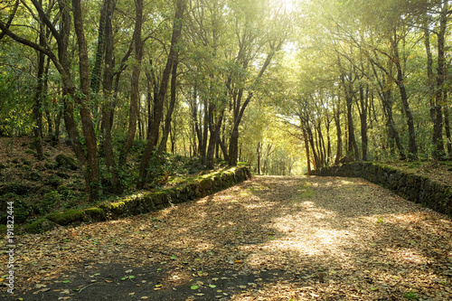 Fényképezés  Sunlight On Path In Oak Woods Of Etna Park, Sicily