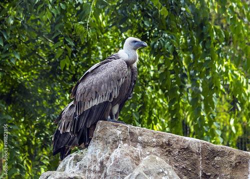 Aigle perché sur un rocher dans un parc animalier.