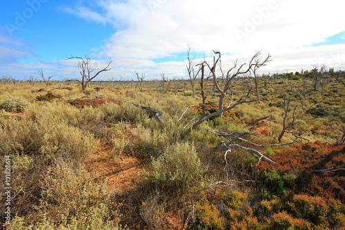 Tuinposter Canyon Australian bushland on the Nullarbor