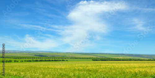 Aluminium Prints Blue Green field and blue sky with light clouds. Wide photo.