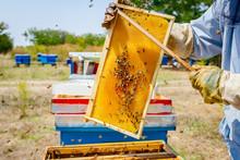 Beekeeper Is Using Bristle To Get Rid Of Bees