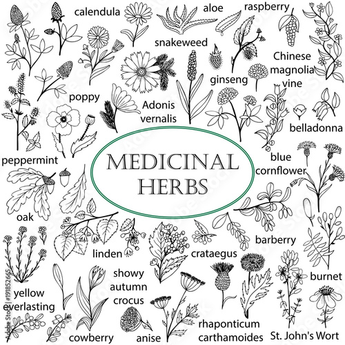 Stampa su Tela  Set of hand-drawn illustrations of medicinal herbs