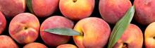Close Up Of Fresh Peaches