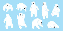 Bear Vector Polar Bear Logo Ic...