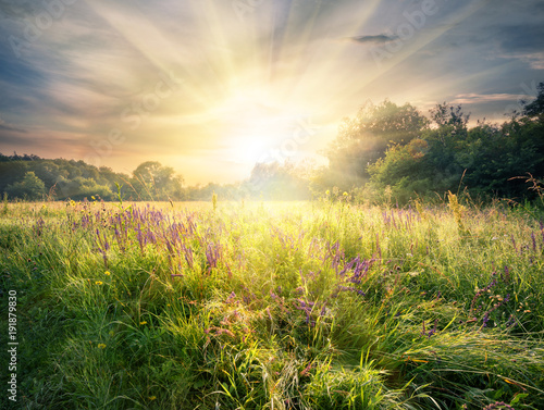 Foto op Canvas Pistache Meadow with wildflowers under the bright sun