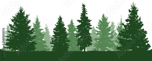 Forest fir trees silhouette. Coniferous green spruce. Vector on white background - 191881876