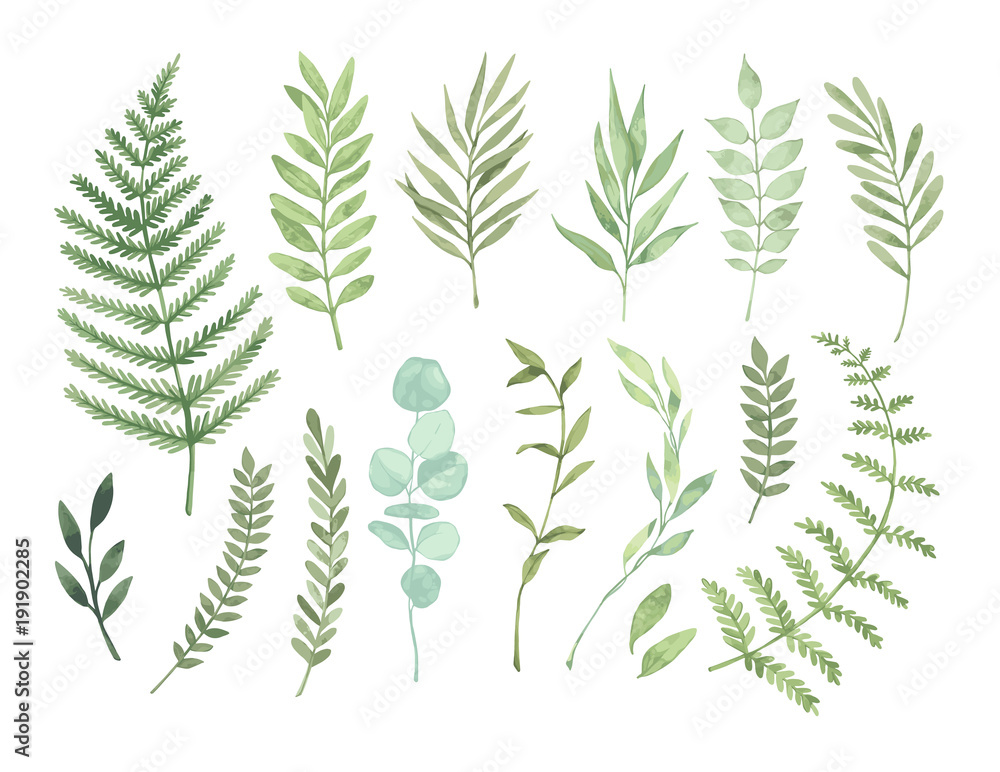 Fototapeta Vector watercolor illustrations. Botanical clipart. Set of Green leaves, herbs and branches. Floral Design elements. Perfect for wedding invitations, greeting cards, blogs, posters and more