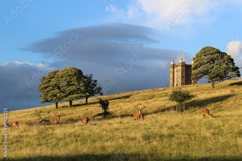 Canvas Deer in Disley Lyme Park