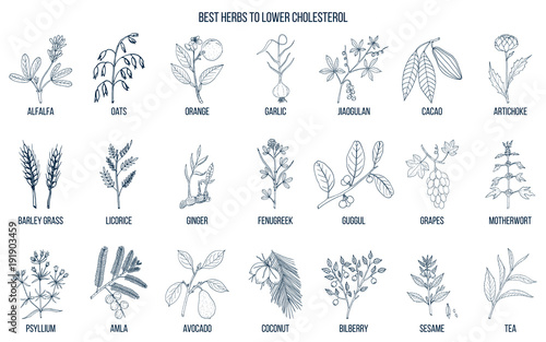 Photo  Collection of best herbs for lower cholesterol