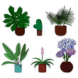 Set of cute colorful different flowers in pot cartoon style vector illustration