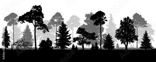 Fotografia, Obraz  Coniferous natural forest trees set silhouette