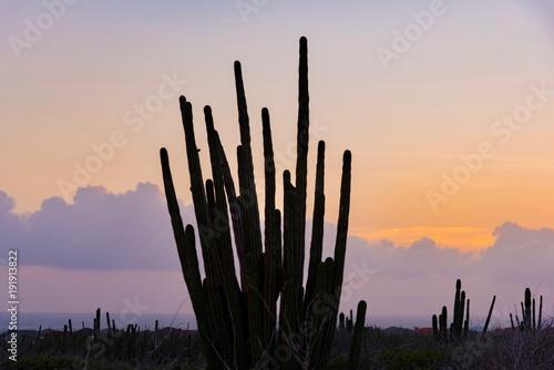 Papiers peints Cactus cactus desert at sunset on the Caribbean island of Aruba Netherlands Antilles