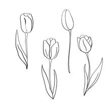 Vector Tulips Illustration. International Women's Day. For Design, Card, Print Or Background