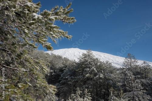 Fényképezés  Icy Pinewood And Etna Mount, Sicily