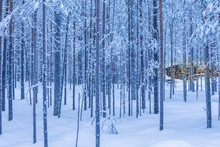 Travel Destinations Ideas. Illuminated Wooden House Located In Tranquil Picturesque Nordic Forest In Scandinavia At Christmas Time.