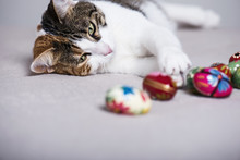Cute Cat Playing With Multicolor Easter Eggs.