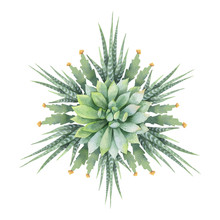 Watercolor Vector Round Mandala Of Cacti And Succulent Plants Isolated On White Background.