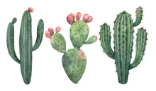 Watercolor Vector Set Of Cacti...
