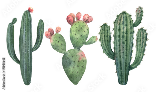 Obraz na plátně Watercolor vector set of cacti and succulent plants isolated on white background