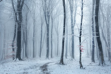 Fairy Tale Foggy Forest Trail During Winter, Snow Covered