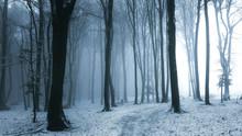 Fairy Tale Foggy Trail In Mist...