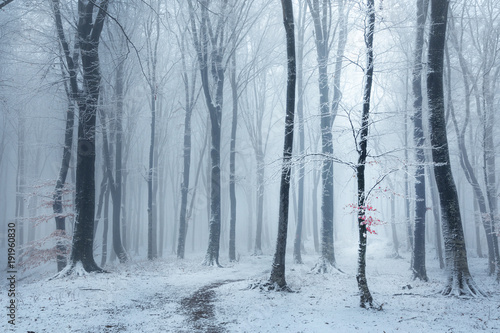 Photo Fairy tale foggy forest trail during winter, snow covered