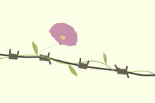 Barbed Wire & Flower