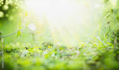 Fotografia  Sunny summer background with green grass , sun shine and bokeh