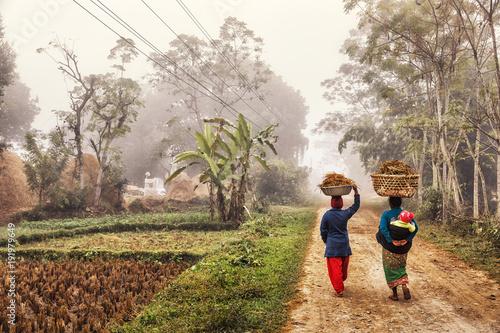 Staande foto Nepal Foggy Rural Scene, Terai, Nepal