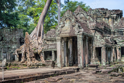 Foto op Aluminium Bedehuis Roots of a banyan tree at Ta Prohm temple in Angkor, Siem Rep, Cambodia