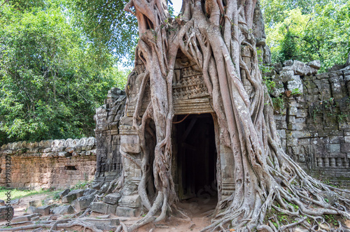 Photo Roots of a banyan tree at Ta Prohm temple in Angkor, Siem Rep, Cambodia