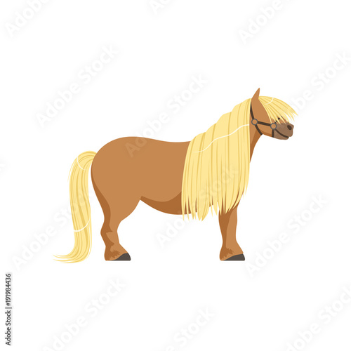 Photographie Shetland pony, thoroughbred horse vector Illustration