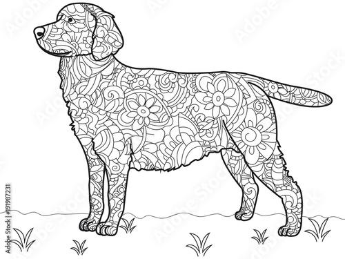 Dog Labrador Antistress Coloring Book. Vector – kaufen Sie diese ...