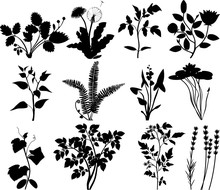 Set Of Silhouettes Of Different Plants