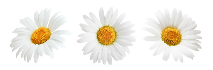 Daisy flower isolated on wh...