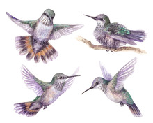 Watercolor Hummingbird Set