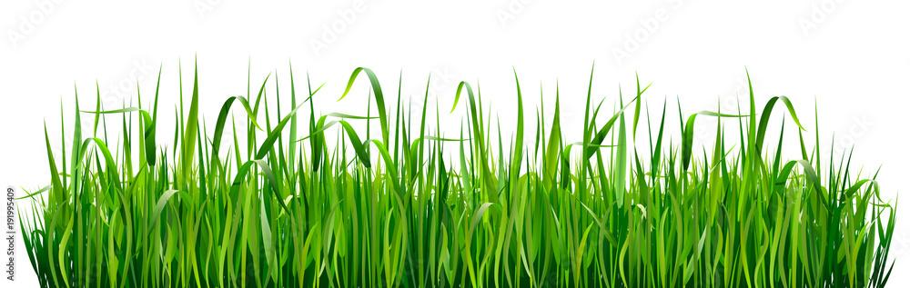 Fototapeta Green grass borders. High green fresh grass isolated on white background.