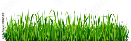 Obraz Green grass borders. High green fresh grass isolated on white background. - fototapety do salonu