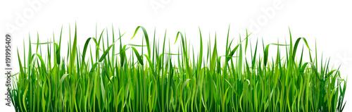 Granice trawy zielonej. Wysoka zielona świeża trawa odizolowywająca na białym tle.