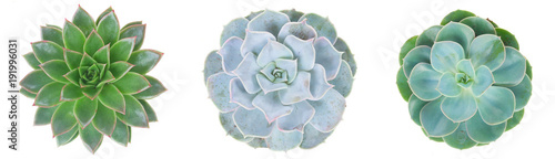 Papiers peints Cactus Succulent on white